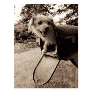 Cartão Postal Cão dentro de uma caixa postal