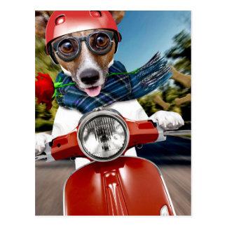 Cartão Postal Cão do patinete, jaque russell