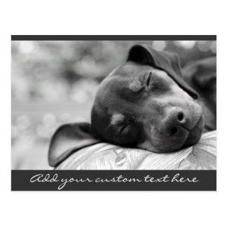 Cartão Postal Cão do Pinscher diminuto do sono