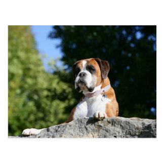 Cartão Postal Cão do pugilista que coloca em uma rocha
