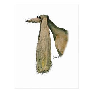 Cartão Postal cão do saluki, fernandes tony