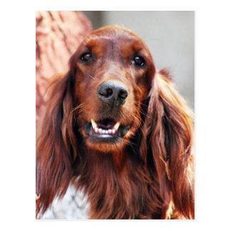 Cartão Postal Cão do setter irlandês