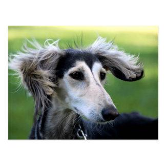 Cartão Postal Cão do vento