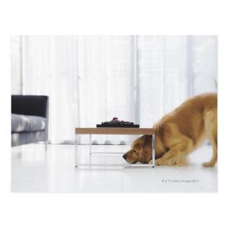 Cartão Postal Cão e mesa