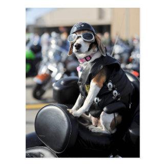 Cartão Postal Cão engraçado na foto da motocicleta