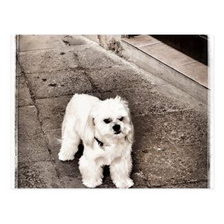 Cartão Postal cão fullsizeoutput_c75 Crabby