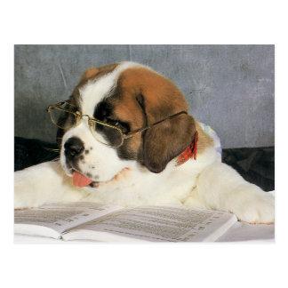 Cartão Postal Cão inteligente