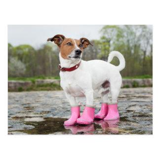 Cartão Postal Cão na chuva