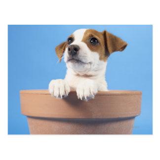 Cartão Postal Cão no flowerpot