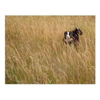 Cartão Postal Cão que funciona através da grama