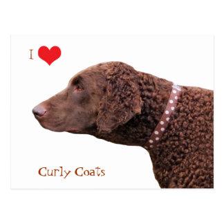 Cartão Postal Cão revestido encaracolado do Retriever eu amo o