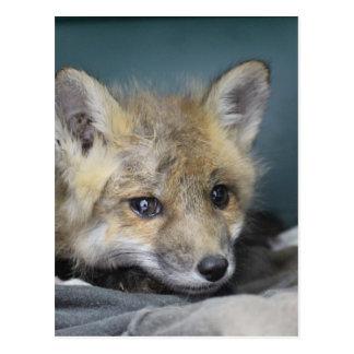 Cartão Postal Capa de telefone do Fox
