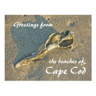 Cartão Postal Cape Cod Massachusetts - Shell & surf