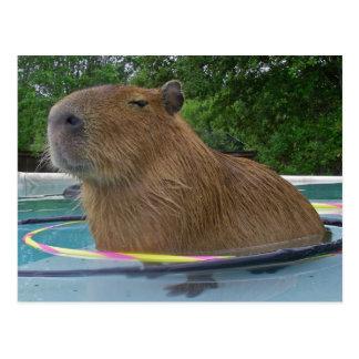 Cartão Postal Capybara da piscina