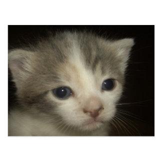 Cartão Postal Cara adorável do gatinho