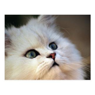 Cartão Postal Cara bonito do gatinho