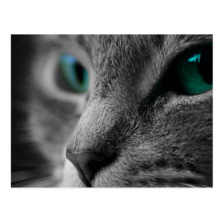 Cartão Postal Cara cinzenta do gato da pele com os olhos verdes