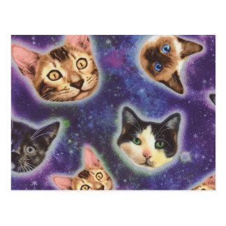 Cartão Postal cara do gato - gato - gatos engraçados - espaço do