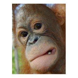 Cartão Postal Cara do orangotango