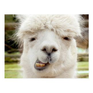 Cartão Postal Cara engraçada da alpaca