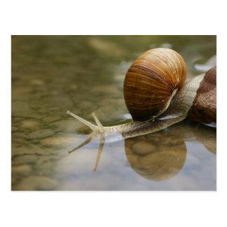 Cartão Postal Caracol bonito e reflexão na água
