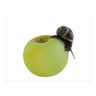 Cartão Postal Caracol e maçã