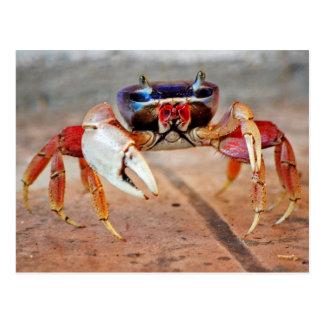 Cartão Postal Caranguejo