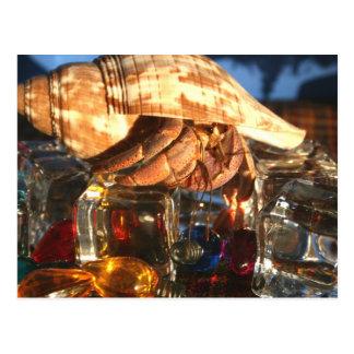 Cartão Postal Caranguejo de eremita em cubos de gelo