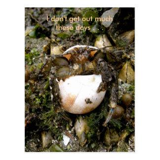 Cartão Postal Caranguejo de eremita, porto holandês, Alaska
