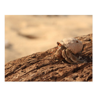 Cartão Postal Caranguejo na praia