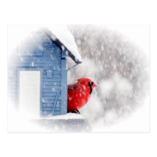 Cartão Postal Cardeal do dia da neve - pássaro