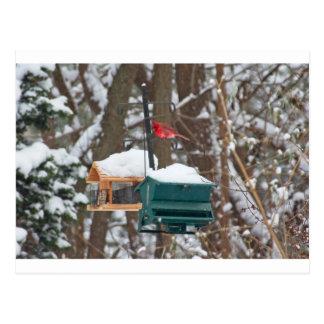 Cartão Postal Cardeal em Birdfeeder