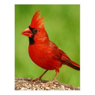Cartão Postal Cardinal