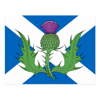 Cartão Postal Cardo escocês e Saltire