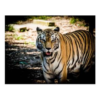 Cartão Postal Cargo do tigre