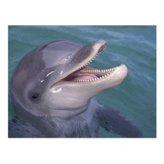 Cartão Postal Caribe, Tursiops 4 do golfinho de Bottlenose