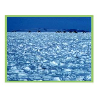 Cartão Postal Caribu que cruza a tundra nevado