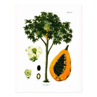 Cartão Postal Carica papaia (papaia)