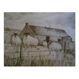 Cartão Postal Carneiros de Newtowncrommelin, condado Antrim,