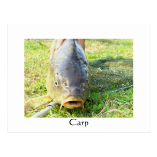 Cartão Postal Carpa - Karpfen - Ponty