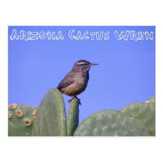 Cartão Postal Carriça de cacto da arizona