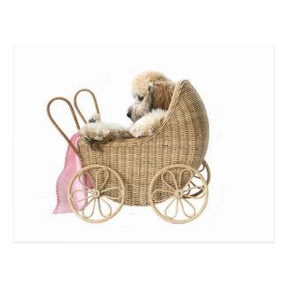 Cartão Postal Carrinho de bebê da caniche