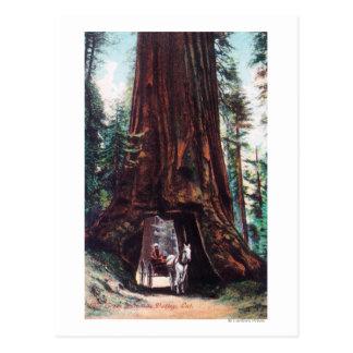 Cartão Postal Carruagem que viaja sob uma sequóia vermelha