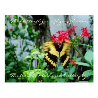 Cartão Postal Cartão/citações da borboleta do vôo