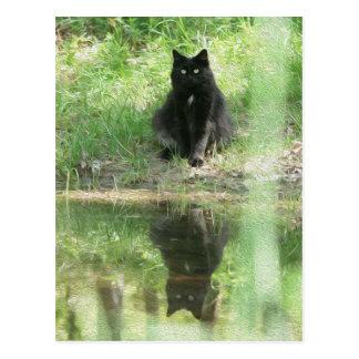 """Cartão Postal """"Cartão das reflexões do gato preto"""""""