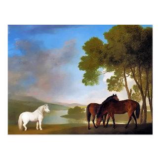 Cartão Postal Cartão: Égua de duas baías & um pônei cinzento