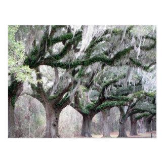 Cartão Postal Carvalhos de Charleston