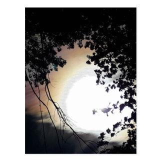 Cartão Postal Carvalhos de Sun e de Pin