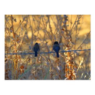 Cartão Postal Casal romântico em um fio, foto do pássaro do