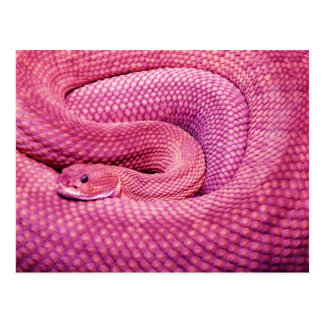 Cartão Postal Cascavel cor-de-rosa do Basilisk